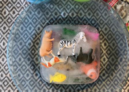 Kuvassa pyyhe ja pesuvati jossa jäädytetyt muoviset eläimet. Pyyhkeen päällä myös elintarvikevärejä muovikipoissa , eläinten pelastamiseen tarkoitettuja välineitä sekä vanha astianpesuainepullo.